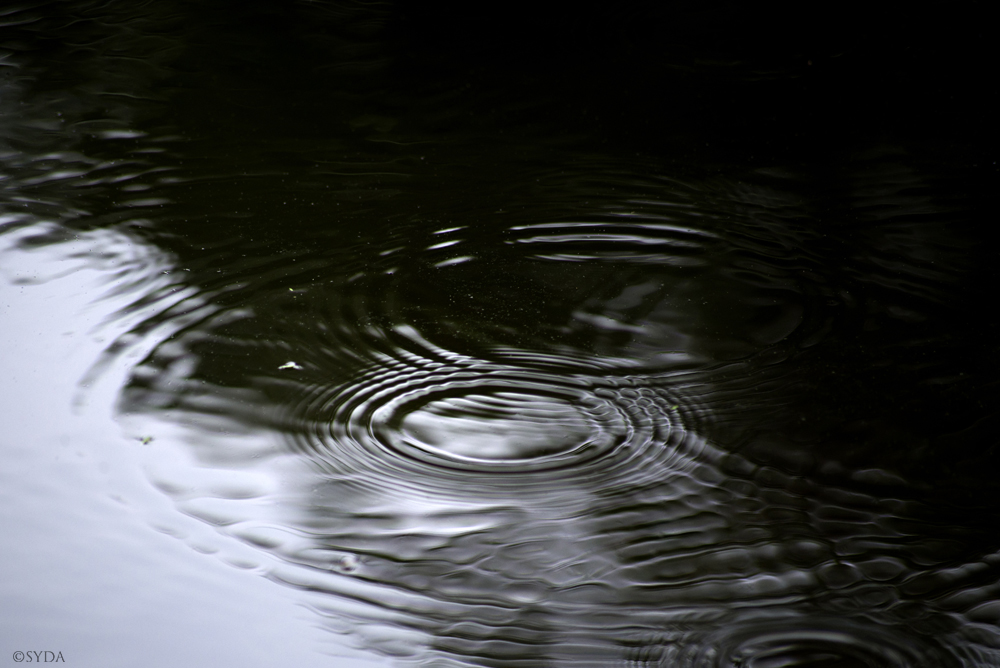 A photo of raindrops on still water.